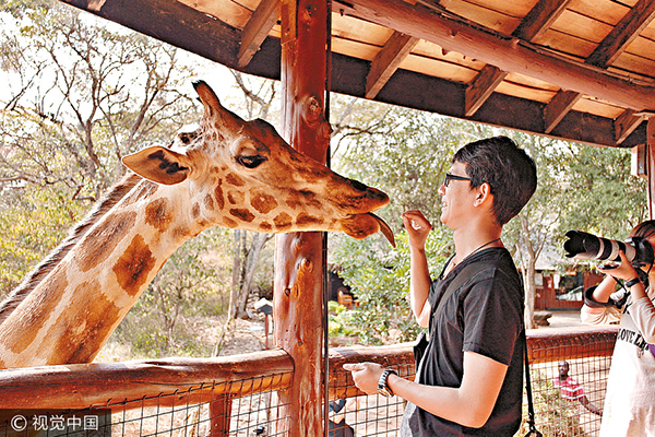 A man feeds a giraffe at a zoo in Kenya.
